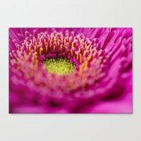 Flower 6620 Canvas Print