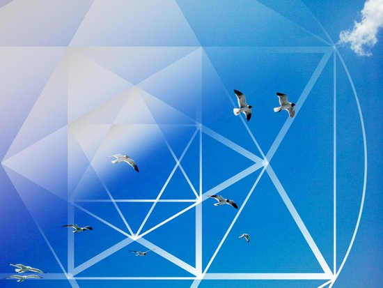 Gulls in Hexagram Flight Art Print