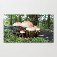 MM - Mushrooms Canvas Print