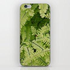 ferns. iPhone & iPod Skin
