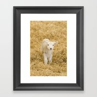Spring Lamb Framed Art Print
