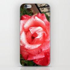 Rainy Day Rose iPhone & iPod Skin