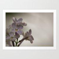 Lilac Morning Art Print