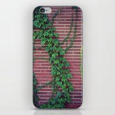 Brick Wall Ivy iPhone & iPod Skin