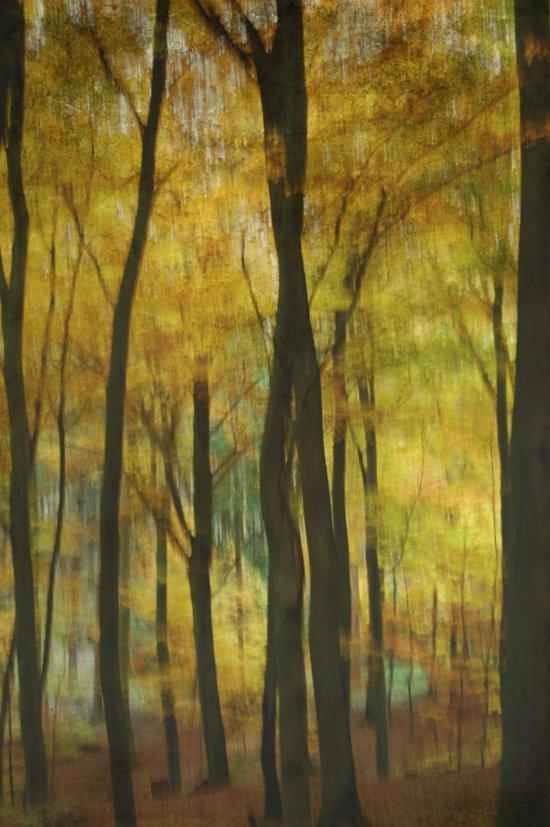 moody wood Art Print