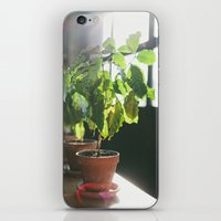 Potted Plant iPhone & iPod Skin