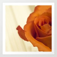 Autumn Rose Art Print