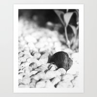 Rock Bottom Art Print