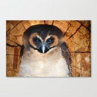 Asian wood Owl Canvas Print