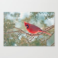 I Spy... (Northern Cardinal) Canvas Print