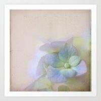 Hydrangea Dreams Art Print