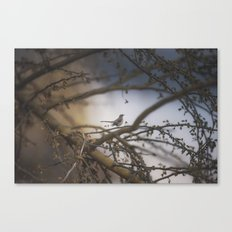 sparrow in the bramble Canvas Print