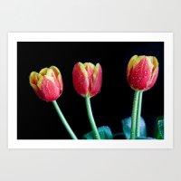 Thirsty Tulips Art Print