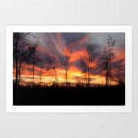 South Georgia Sky On Fir… Art Print