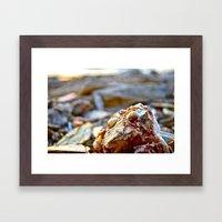 Golden Shell Framed Art Print