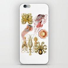 Octopus sea iPhone & iPod Skin