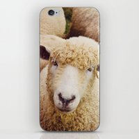 Cotswold Sheep iPhone & iPod Skin