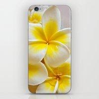 Plumeria Blossoms iPhone & iPod Skin