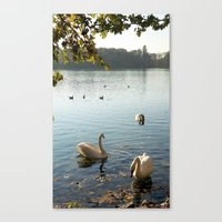 Swans In Autumn Canvas Print