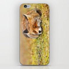 Comfortably Fox (red fox sleeping) iPhone & iPod Skin