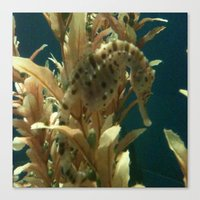 Canvas Print featuring Seahorse by California English