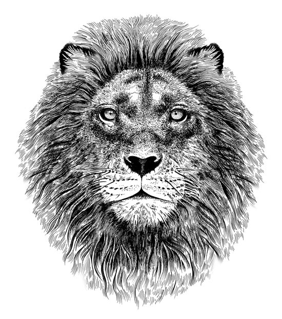 Black+White Lion Art Print