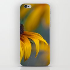 Rudbeckia  13 iPhone & iPod Skin