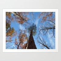 Pine Tree II Art Print