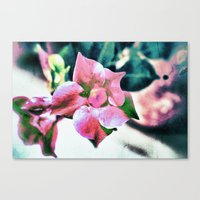 Abstract Dipladenia Canvas Print