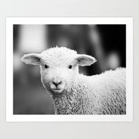 Lamb In Black And White Art Print