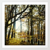 Autumn in the Trees Art Print