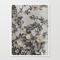 Vintage Hand Colored Dogwood Flower Canvas Print
