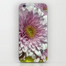 dahlia bloom XII iPhone & iPod Skin