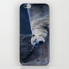 Polar Bear iPhone & iPod Skin