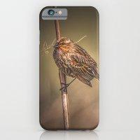Red-winged Blackbird iPhone 6 Slim Case