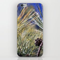 Pine iPhone & iPod Skin