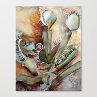 Venus Fly Trap Canvas Print