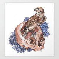 Hawk And Skull Art Print