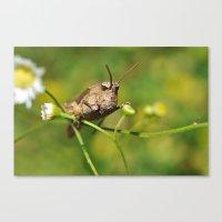 Buzz Lightyear (Grasshopper Face) Canvas Print