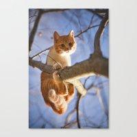 Orange cat and the blue sky Canvas Print