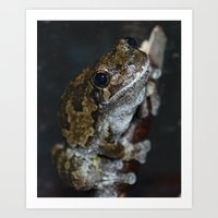 North American Tree Frog Art Print