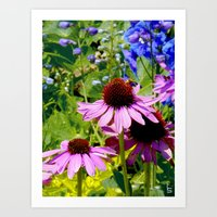 Purple Cone Flowers Art Print