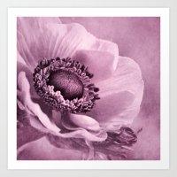 Anemone rosé Art Print