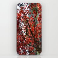Japanese Maple iPhone & iPod Skin