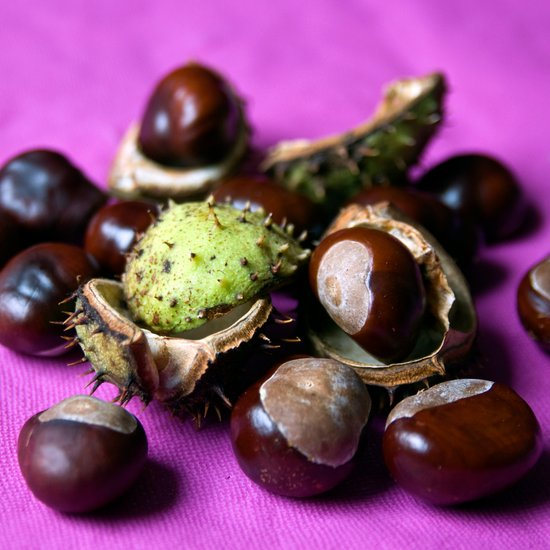 Chestnut - Stillife of Autumn  Art Print