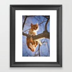 Orange cat and the blue sky Framed Art Print