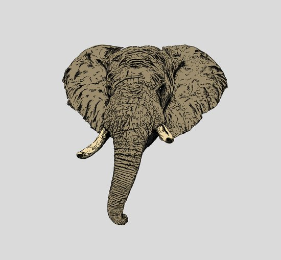 Elephant Head Canvas Print