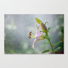 Stargazer Lily 2845 Canvas Print
