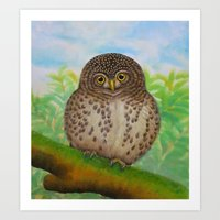 Collared Owlet Art Print