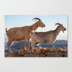 Two goats full portrait 7639 Canvas Print